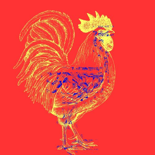 ROOSTER-LIFE