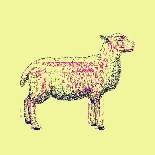 SHEEP-LIFE